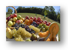 Fruits achats(1).png